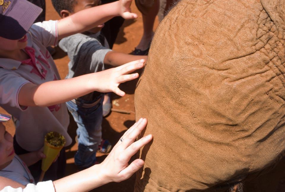in2ea_elefanten-waisenhaus