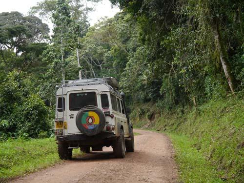 Erdpiste im Dschungel des Bwindi Impenetrable National Parks
