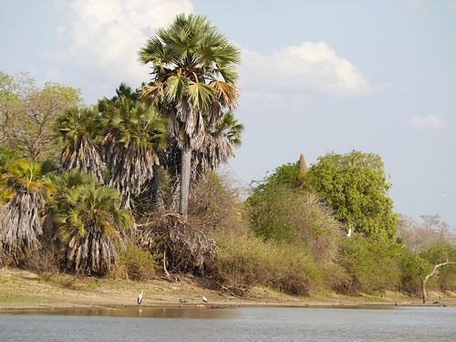 Lake Manze im Selous Game Reserve