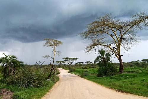 Aufziehendes Gewitter in der Serengeti