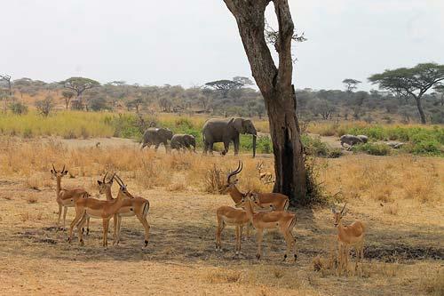 © bei Nimali Africa/Nimali Central Serengeti