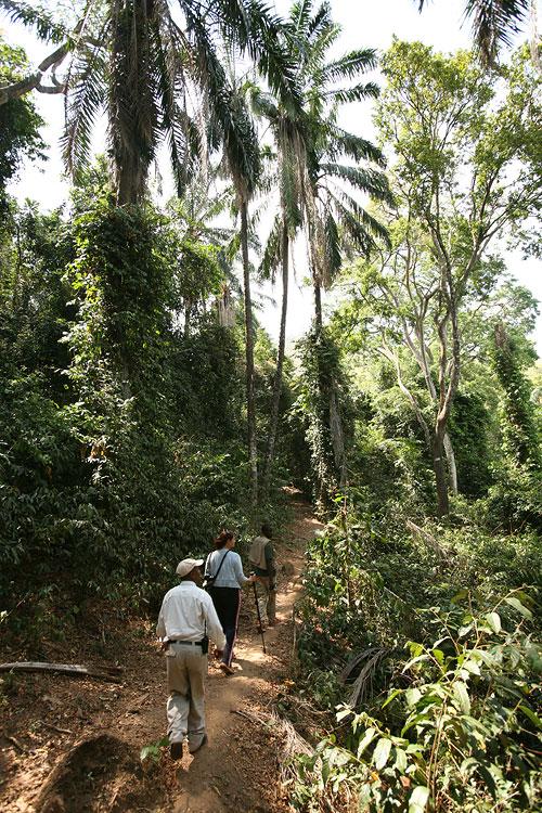 Chimp Trekking im Gombe-Stream-Nationalpark