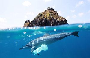 Dolphin plastic bag at fernando de noronha © Jedimentat44