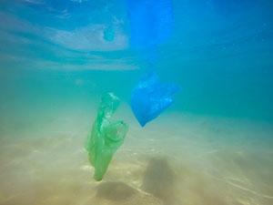 Plastiktüten im Meer © Falco Ermert